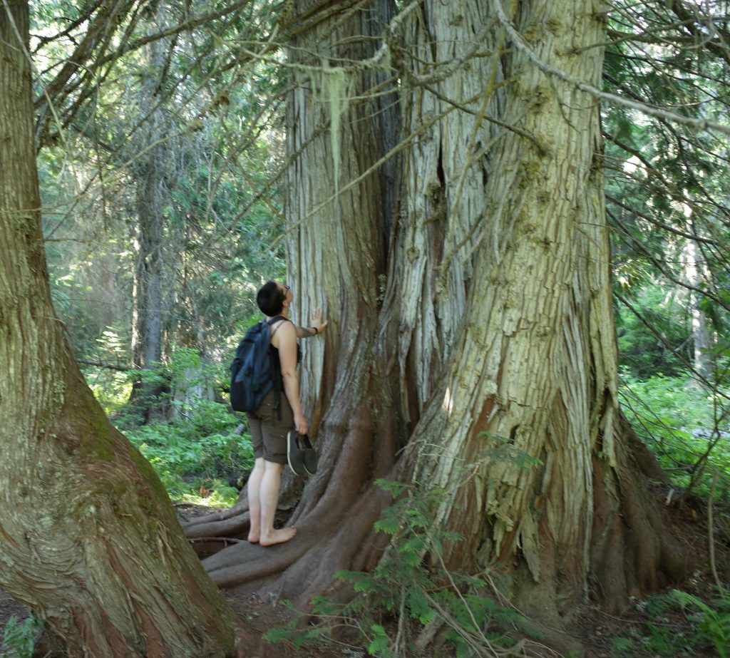 a white person touching a very old tree