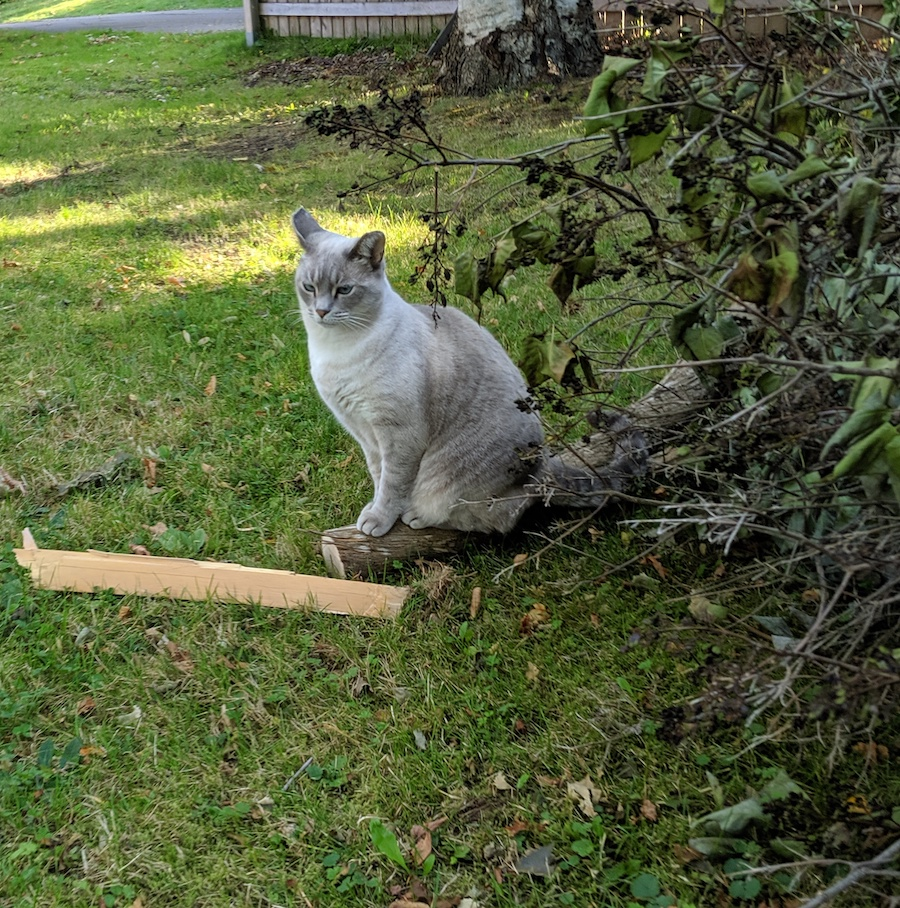 Cat + log.
